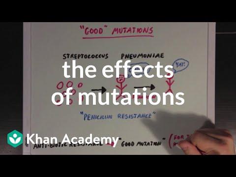 The effects of mutations | Biomolecules | MCAT | Khan Academy