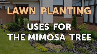 Uses for the Mimosa Tree