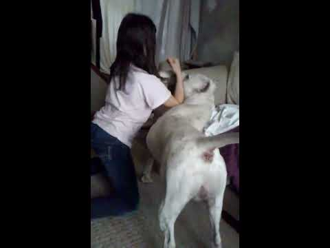 Dog vs little girl