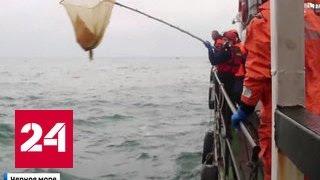 Крушение Ту-154: погибших будут искать днем и ночью