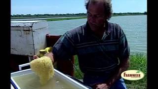 Flashback from 1999 Baby catfish! Farmweek - July 27, 2012
