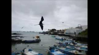 preview picture of video 'PUERTO AYORA ISLA SANTA CRUZ GALAPAGOS'