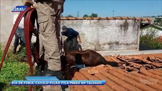 Cavalo cai de telhado em Ivaiporã