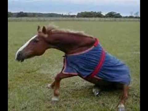 Comprare lattivatore di cavallo in targhe