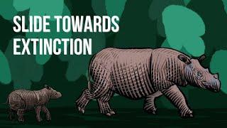 How the Sumatran rhino became critically endangered