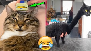 Cutest & Funniest Pets - Best Of The 2021 Funny Cat 😺 & Dog 🐶 Videos 😁 😂😍