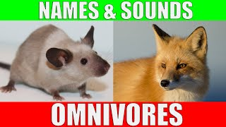 OMNIVOROUS ANIMALS Names and Sounds | Learn Omnivore Animals