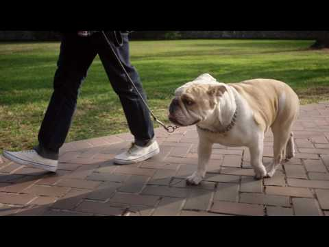 Georgetown University - video