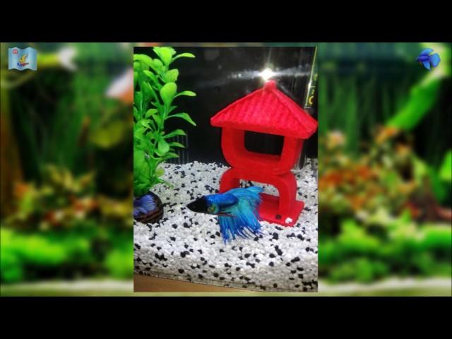 "My ""Superfish"" Home 8 Nano Tank With Betta Fish,..."
