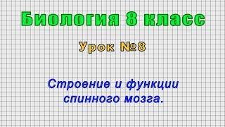 Биология 8 класс Урок 8