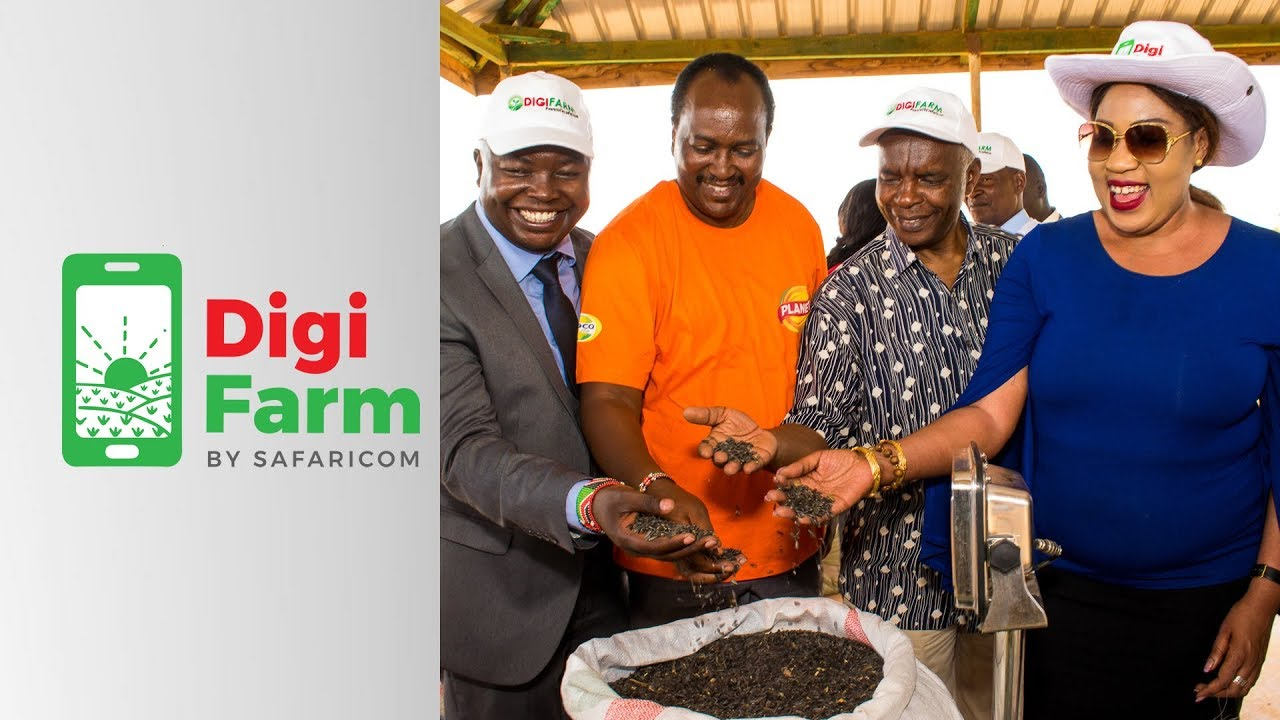DigiFarm Makueni County Sunflower Buying Event – 28th March 2019