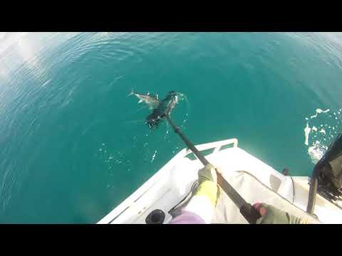longtail tuna in Darwin
