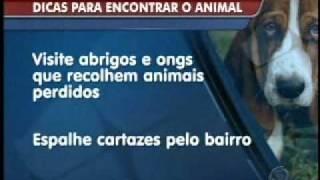 Registro Geral do Animal (RGA) ajuda a encontrar bichos perdidos