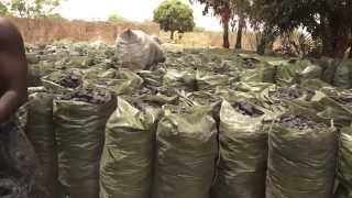 preview picture of video 'Hardwood Charcoal Export Import - Dove Agro Seeds Ltd Product profile'