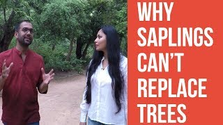 Why Saplings Can't Replace Trees, explains Neha Sinha