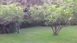 Video del alojamiento El Higueral de La Sayuela