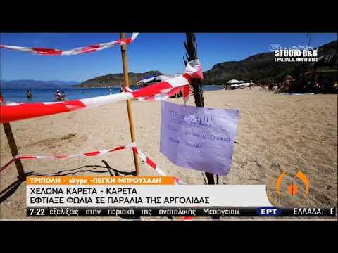 Καρέτα-καρέτα | Έφτιαξε φωλιά σε παραλία της Αργολίδας | 09/06/2020 | ΕΡΤ