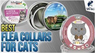 7 Best Flea Collars For Cats 2018