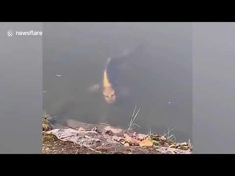 Рыбу с человеческим лицом сняли туристы в Китае