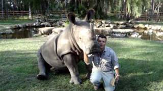 Walter the White Rhino