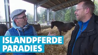Islandpferde Paradies