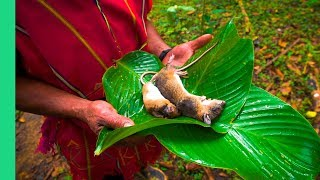 Exotic Rural Thai Cuisine! WARNING: Shows rat catching and cooking scenes