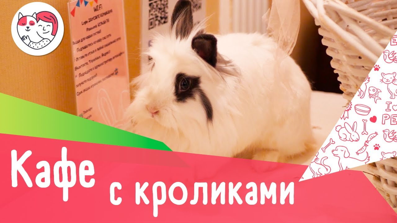 Тайм-кафе с кроликами «Зайкафе»