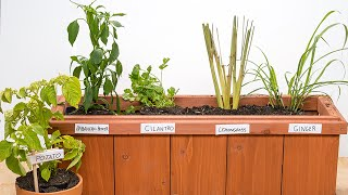 Green onions are one of the easiest plants to regrow from the stubs. Growing your own herbs cuts down on the plastic and styrofoam that store-bought herbs tend to be packaged in.