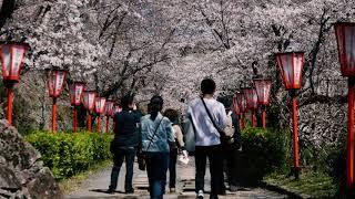 歡迎來到櫻花城堡鎮、津山
