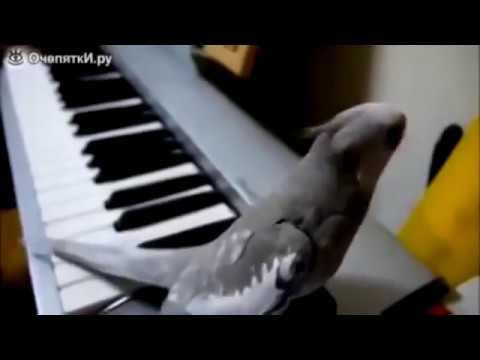 Самые смешные и умные попугаи. Most funny parrots ▶5:01