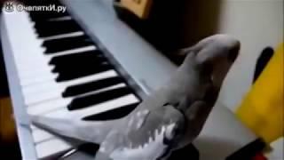Самые смешные и умные попугаи. Most funny parrots