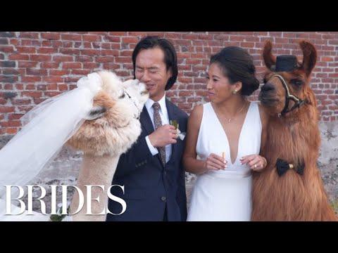 Meet portland s viral wedding llamas brides mp3