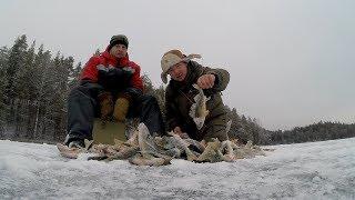 Ловля окуня на балансир зимой в карелии