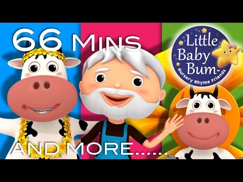 DAISY | BINGO | Plus Lots More Nursery Rhymes | 66 Minutes Compilation from LittleBabyBum!