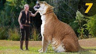 7 สัตว์ ลูกผสมที่คุณอาจไม่เชื่อว่ามันมีอยู่จริง(สัตว์โลก)