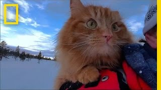 Watch: Skiing With Adorable Adventure Cat Jesperpus | National Geographic thumbnail