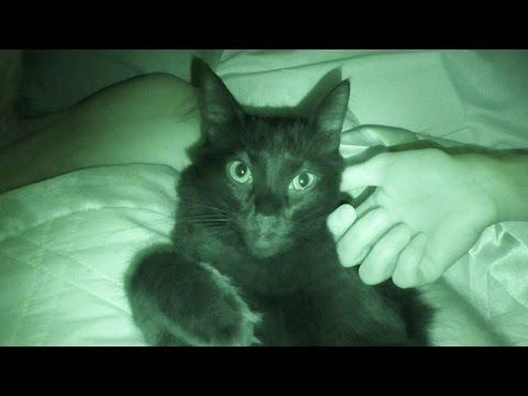 بالفيديو.. كاميرا ليلية تكشف ما تفعله قططك أثناء نومك وفى غيابك