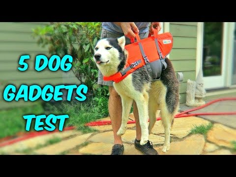 5 Dog Gadgets On Amazon - Part 3