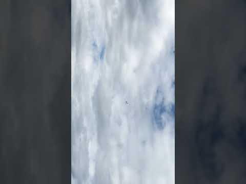 avios-bushmule-on-floats