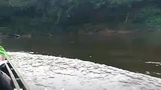preview picture of video 'Petualangan di sungai ambalau Kalbar'
