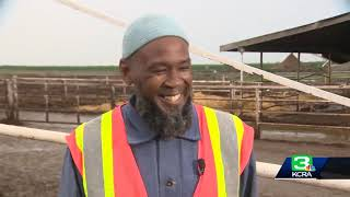 KCRA 3 – Inmates learning to become dairy farmers in Tracy