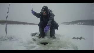 Ловим окуня и готовим на турбопечке PS 1500 Якутия Yakutia