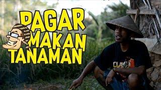 Pagar Makan Tanaman - Film Komedi Cah Pati