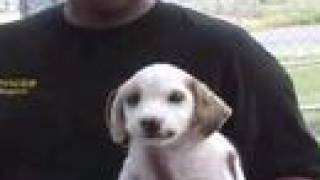 Clovis Animal Shelter pet of the week July 30-August 3, 2007