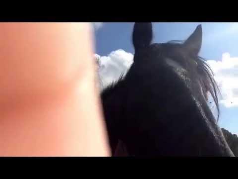 My horse xxxx