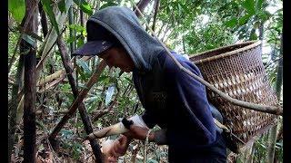 Một ngày đong đầy cực nhọc trong rừng vắng - Hương vị đồng quê - Bến Tre - Miền Tây