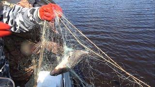 Ограничение рыбалки в период нереста 2019