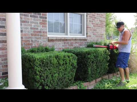 Milwaukee M18 Hedge Trimmer Review, Gas Vs. Electric