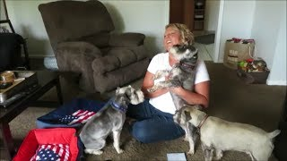 How Old Are Your Dogs?| Why All Boys? | Frequently Asked Questions Answered