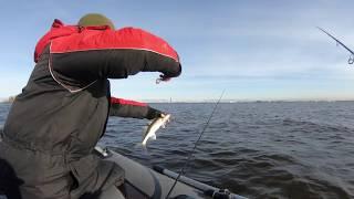 Рыбалка на канонерском острове 2019 осень